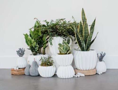 Winter Care for Indoor Houseplants