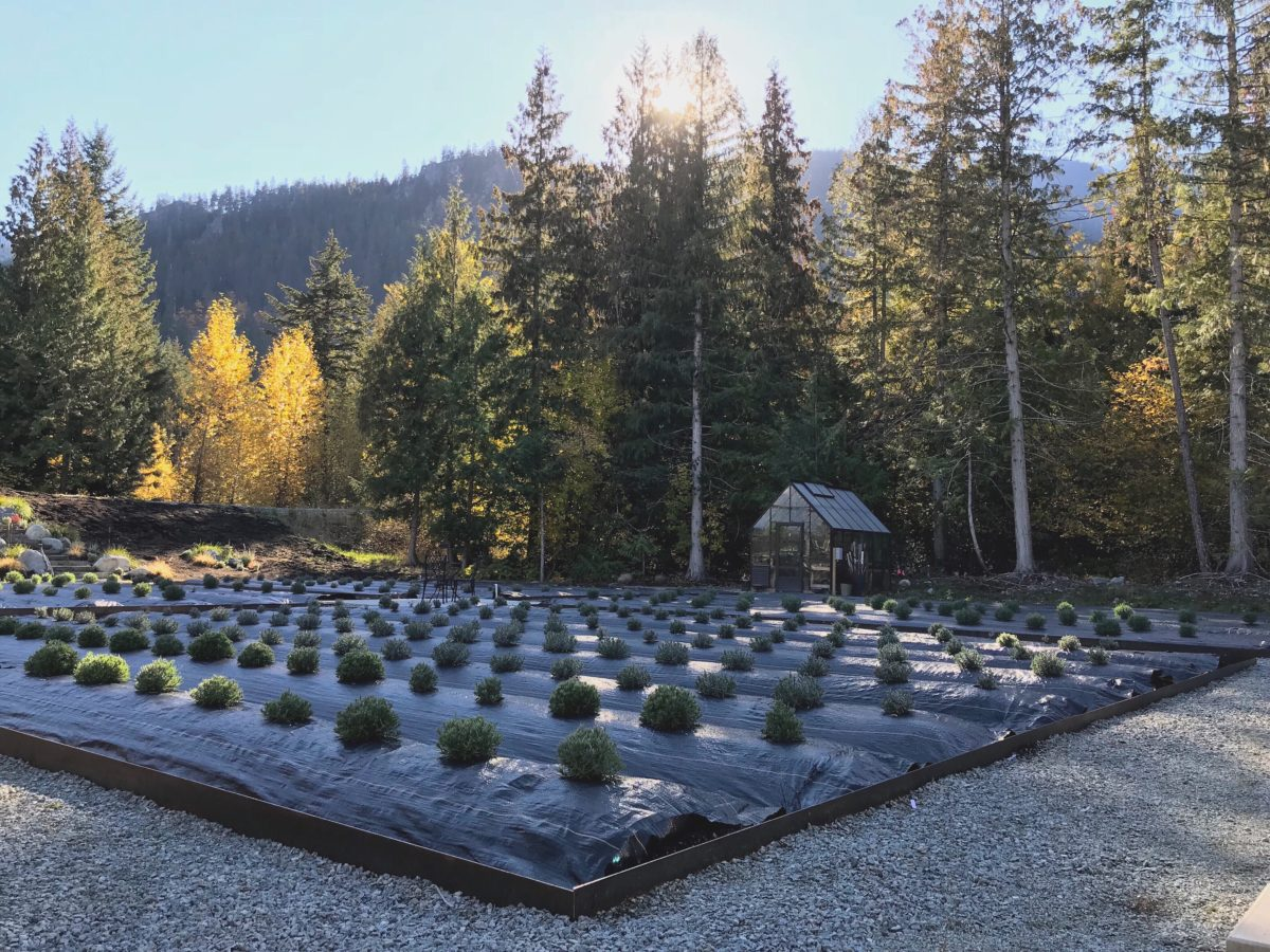 From The Garden Shed Farm , Pemberton Meadows, BC - Fall Update
