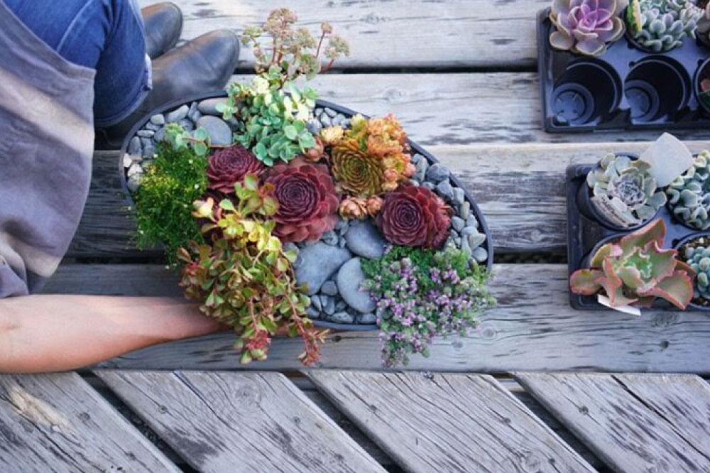 Succulent container garden design