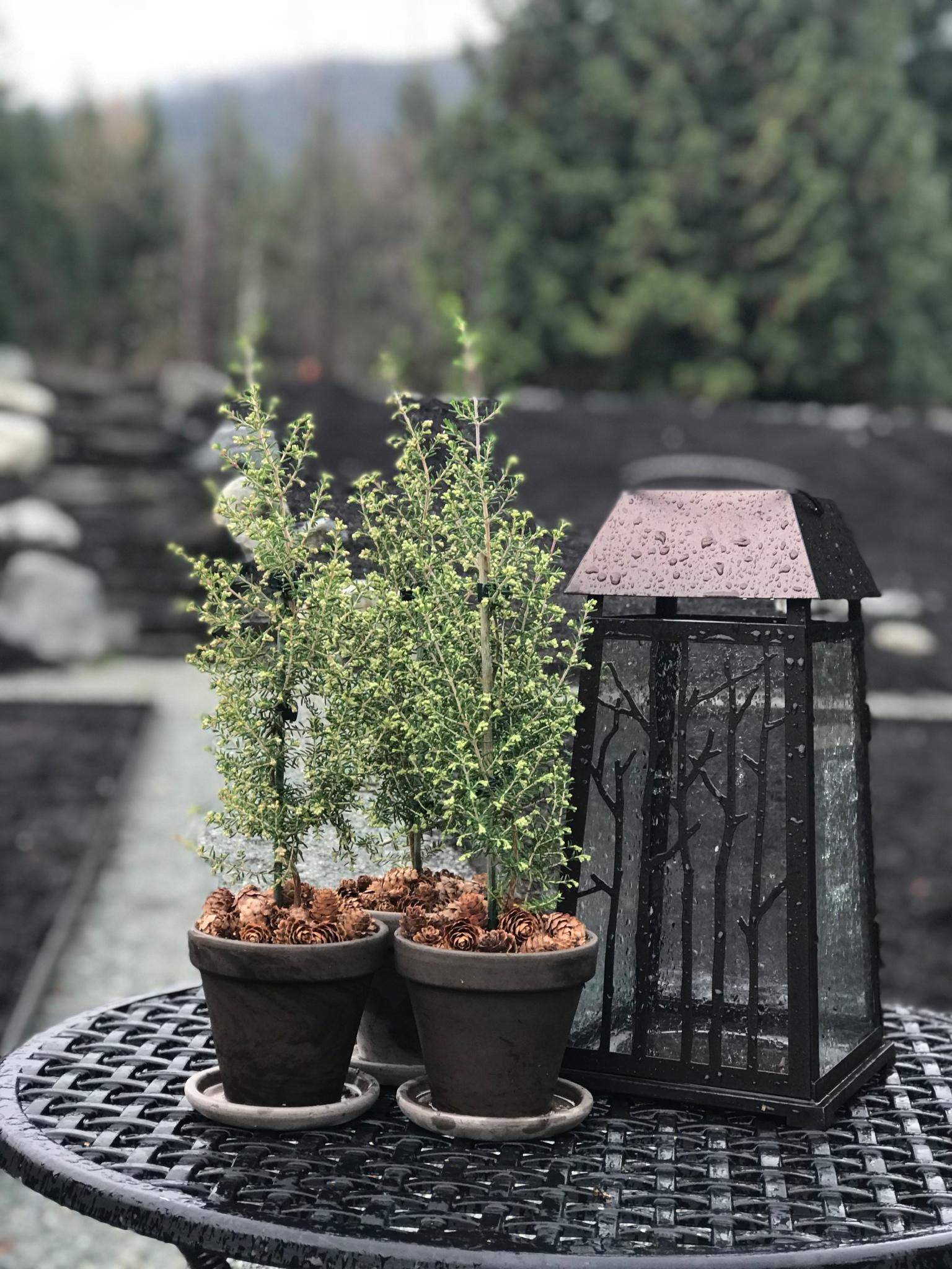 Miniature Pine Cone Decor
