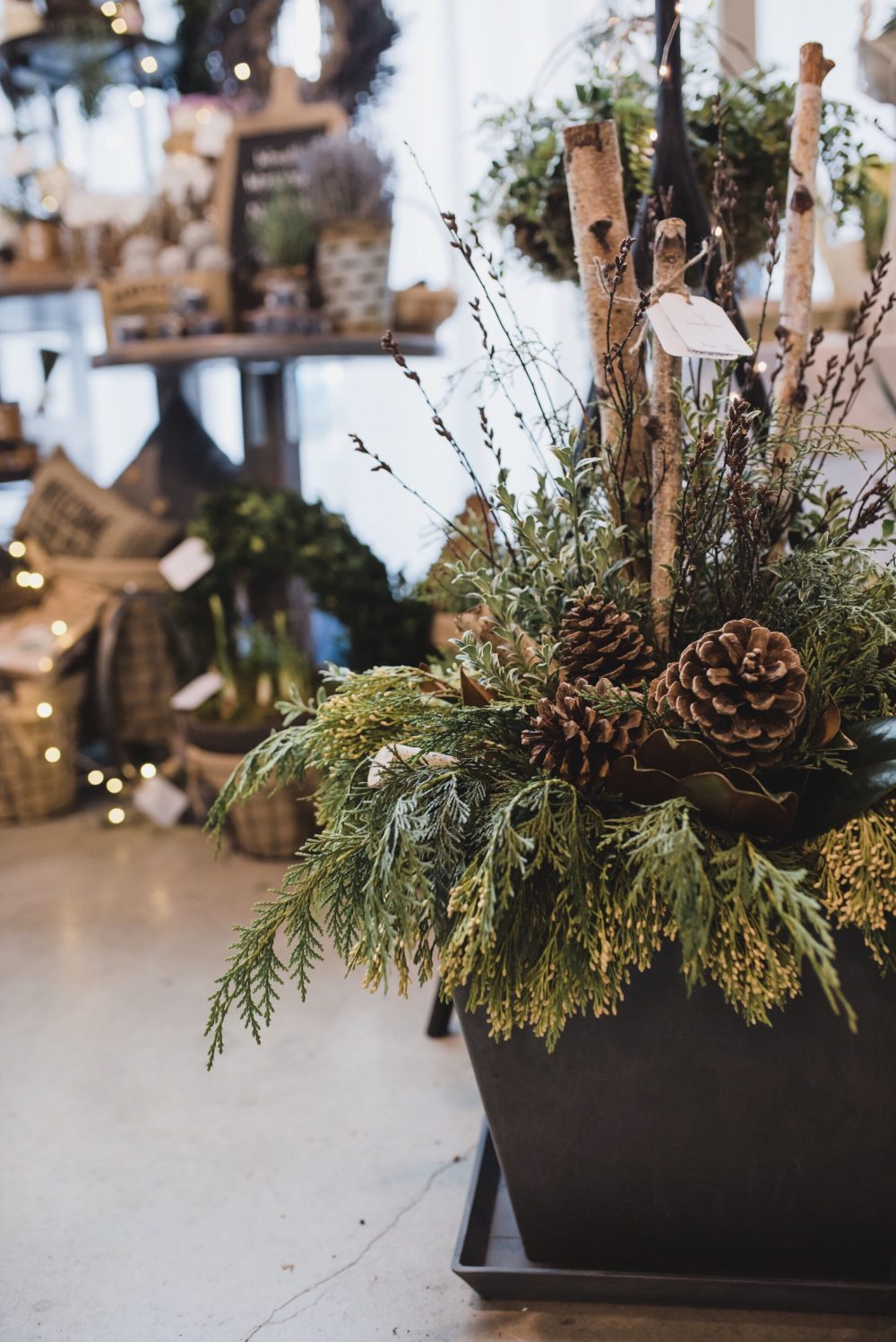 Holiday Container Garden with Pine Cones