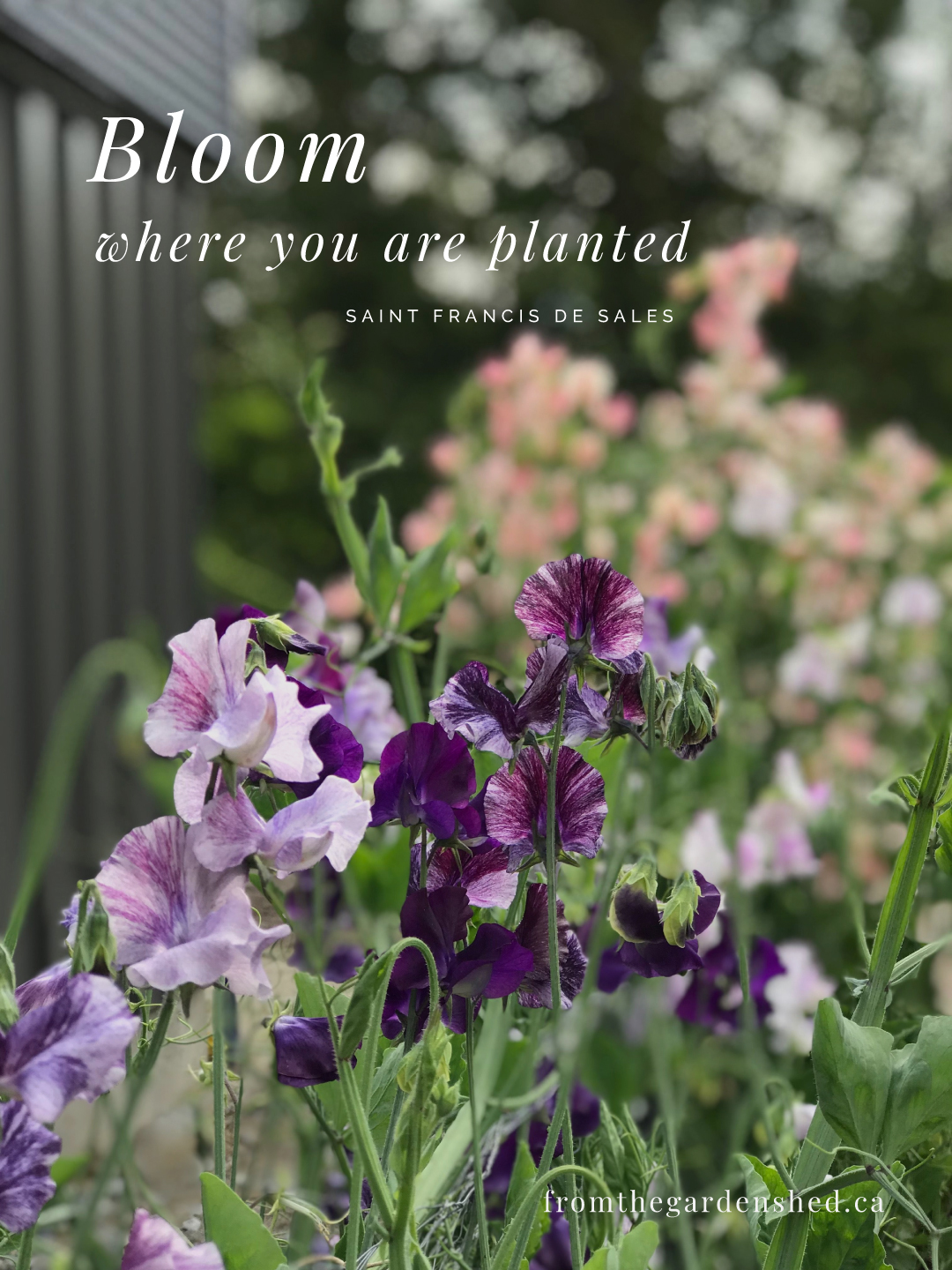Bloom where you are planted quote image