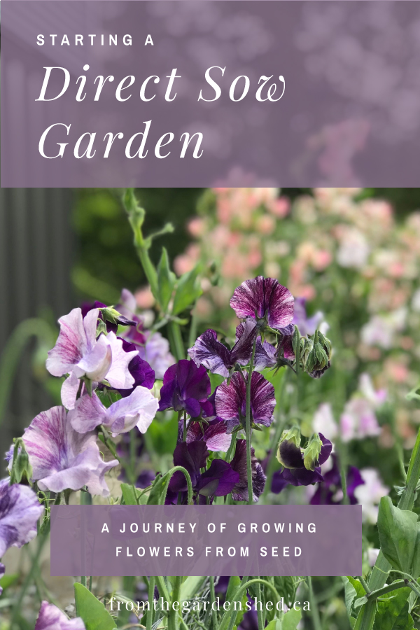 How to Start a Direct Sow Garden