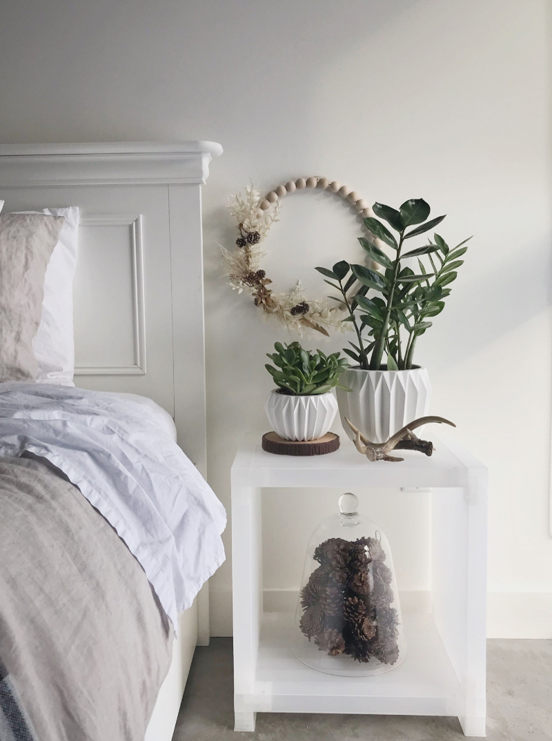 Top Modern Houseplants